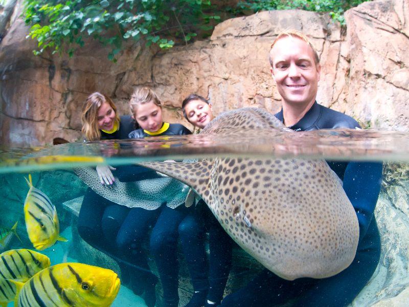 ad59bb7716ce4 Nado com tubarões no Discovery Cove - Próximo Destino Orlando